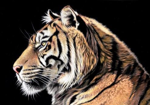 The Wild Side II by Darryn Eggleton - Box Canvas